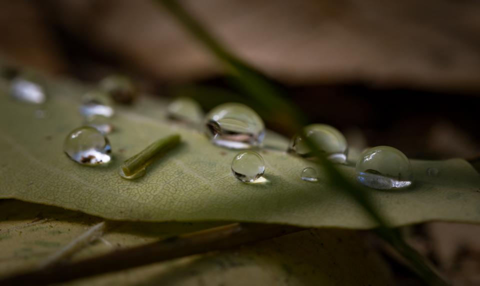 leaf outdoor wet water raindrops blur nature