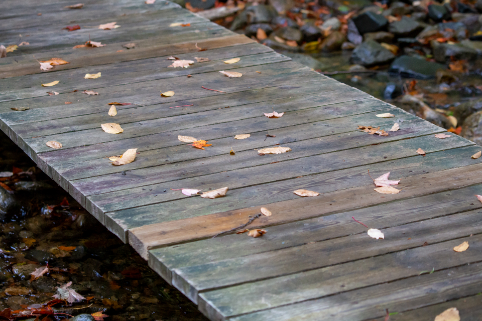 fall leaves wood foliage autumn nature outdoors bridge wooden trail path forest hiking