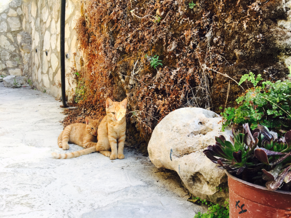 animals pets garden flower plant ginger tail cat brick wall