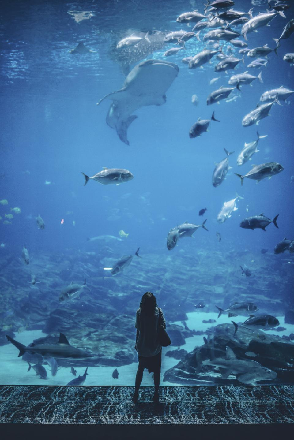 nature waterr people woman wander alone aquarium fish