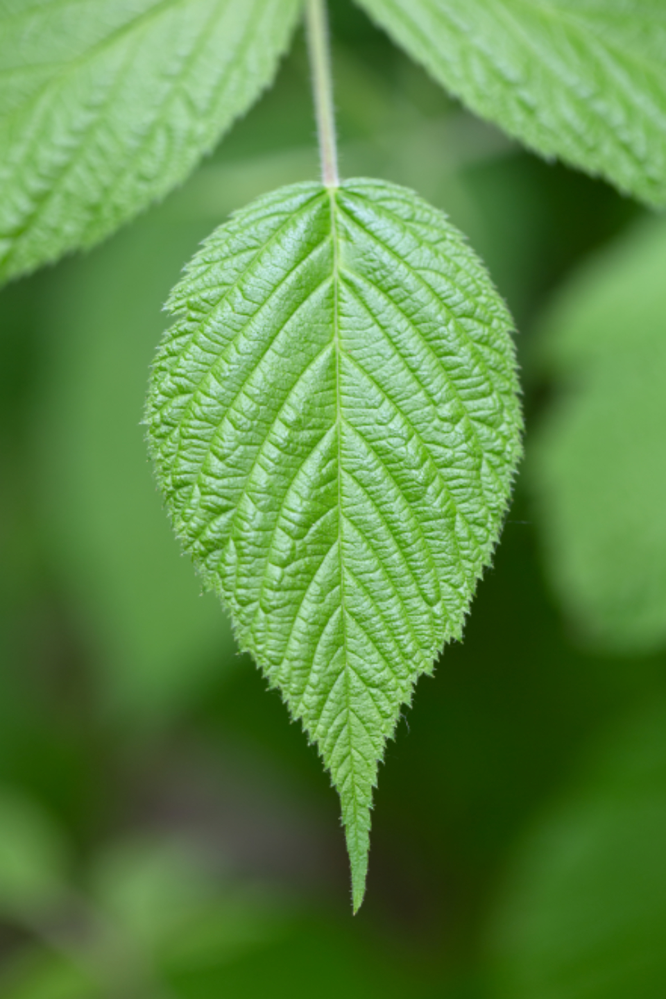 macro plant leaf natural texture nature leaves green background growth close up pattern forest mobile wallpaper trees