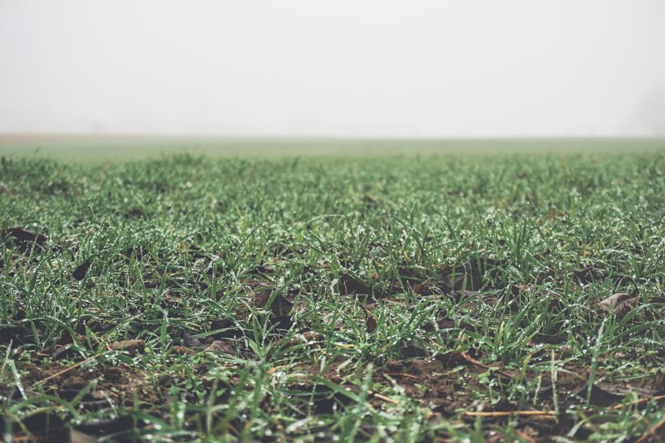 green grass field foggy nature countryside rural