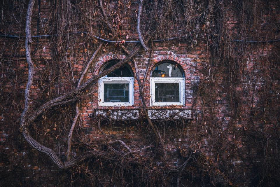 house home residence exterior bricks wall windows panes branches vines fall autumn dry brown