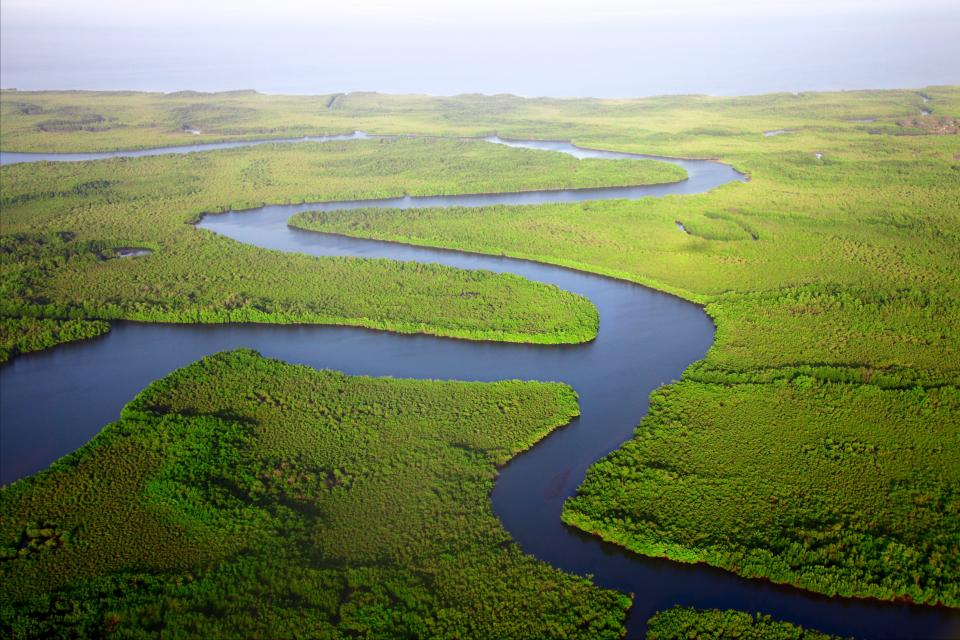 green trees plants river water aerial view outdoor sea geography