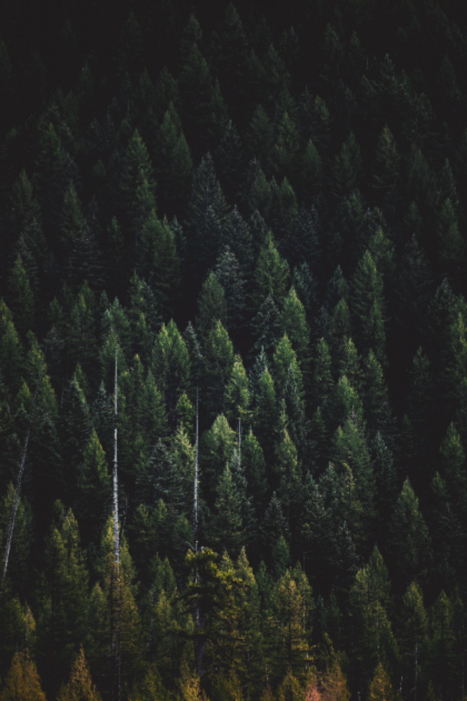 trees wallpaper forest nature earth green