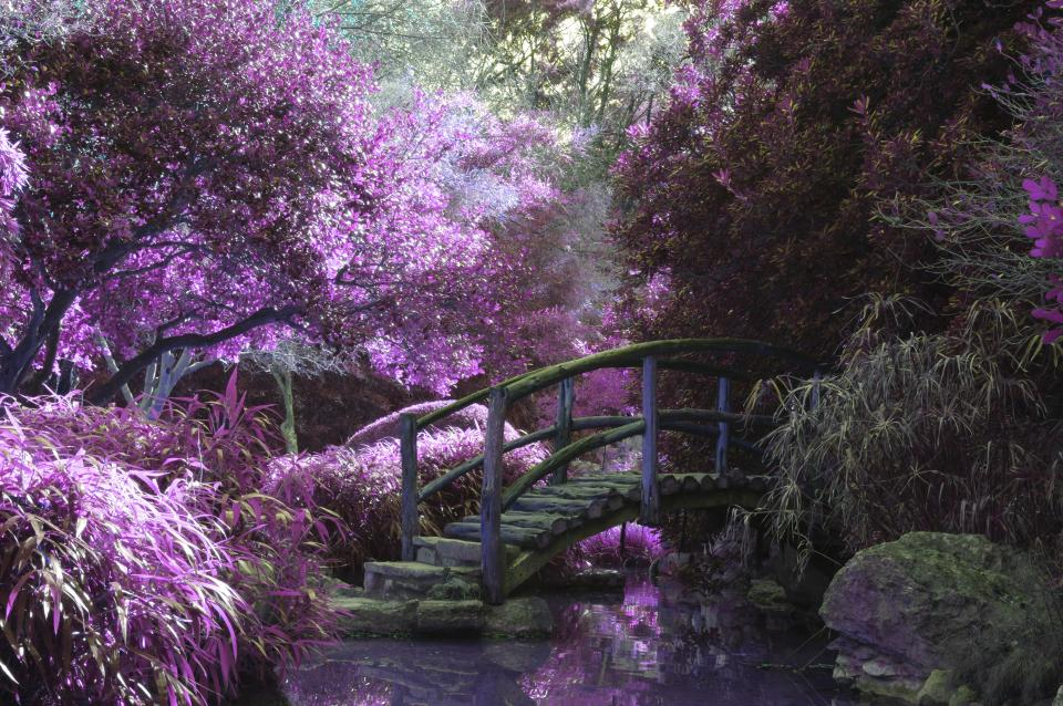 flower violet petal bloom garden plant nature autumn fall nature travel adventure bridge