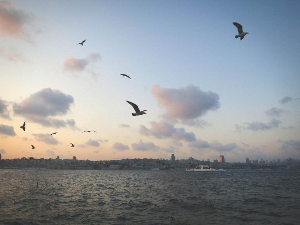 seagulls birds sky clouds water boats coast city skyline view buildings Istanbul Turkey