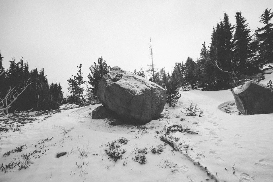 rock bolder trees snow nature