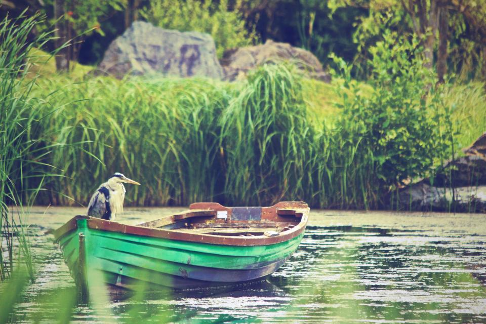 heron bird boat water lake nature