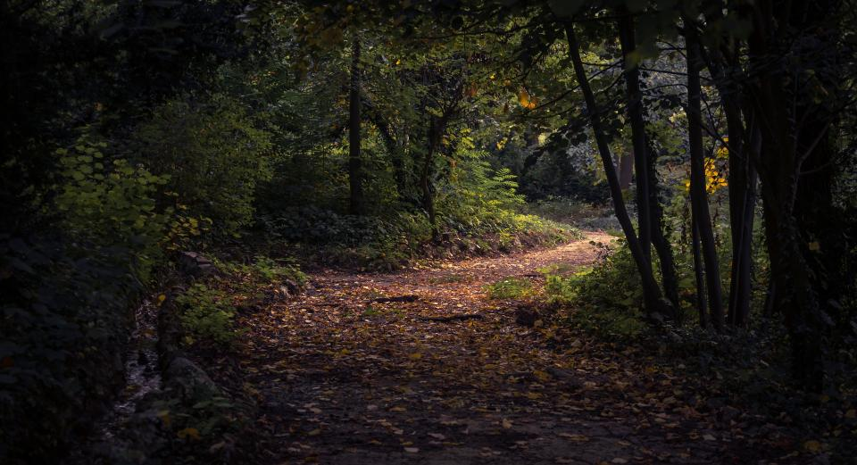 leaf fall autumn path forest trees plant nature dark