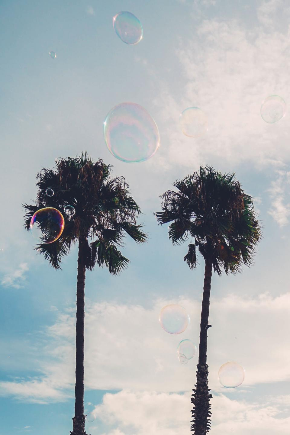tree plant nature sky clouds bubbles sunny summer