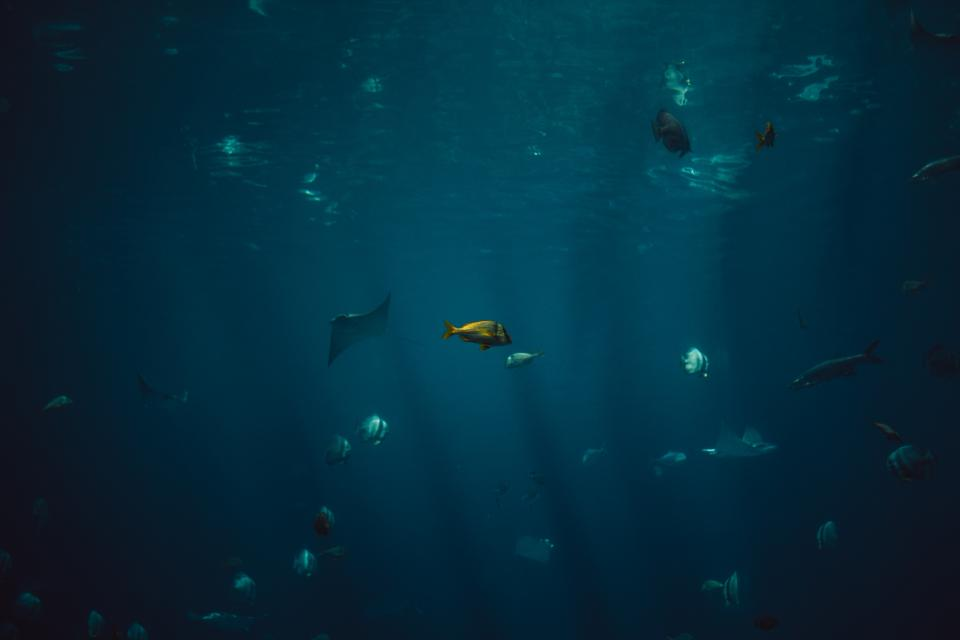 fish aquatic animal ocean underwater blue water