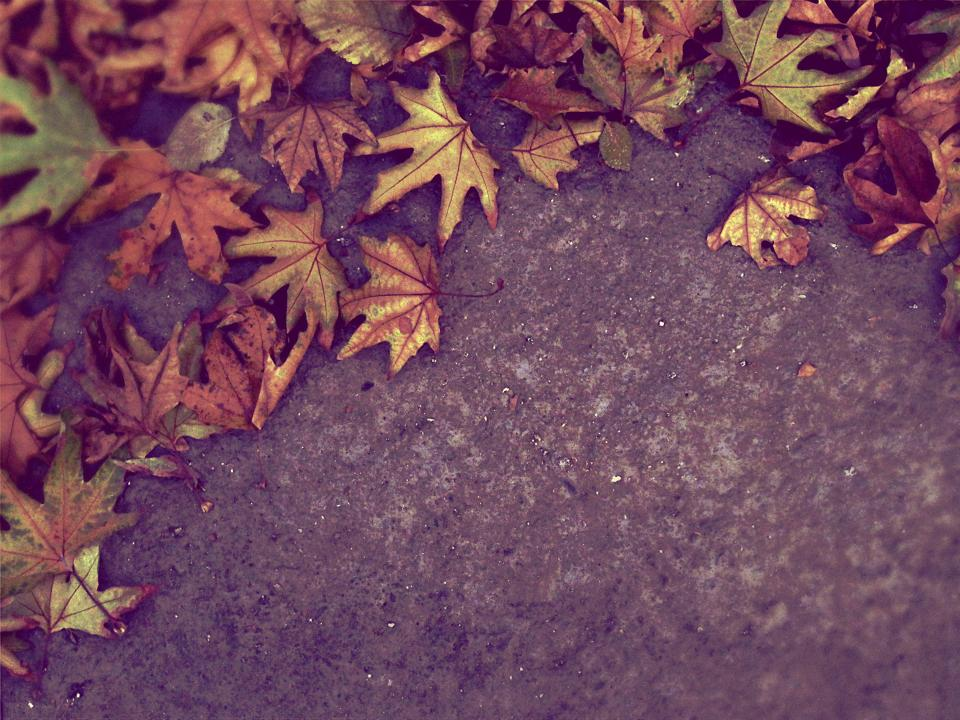 autumn fall leaves nature ground