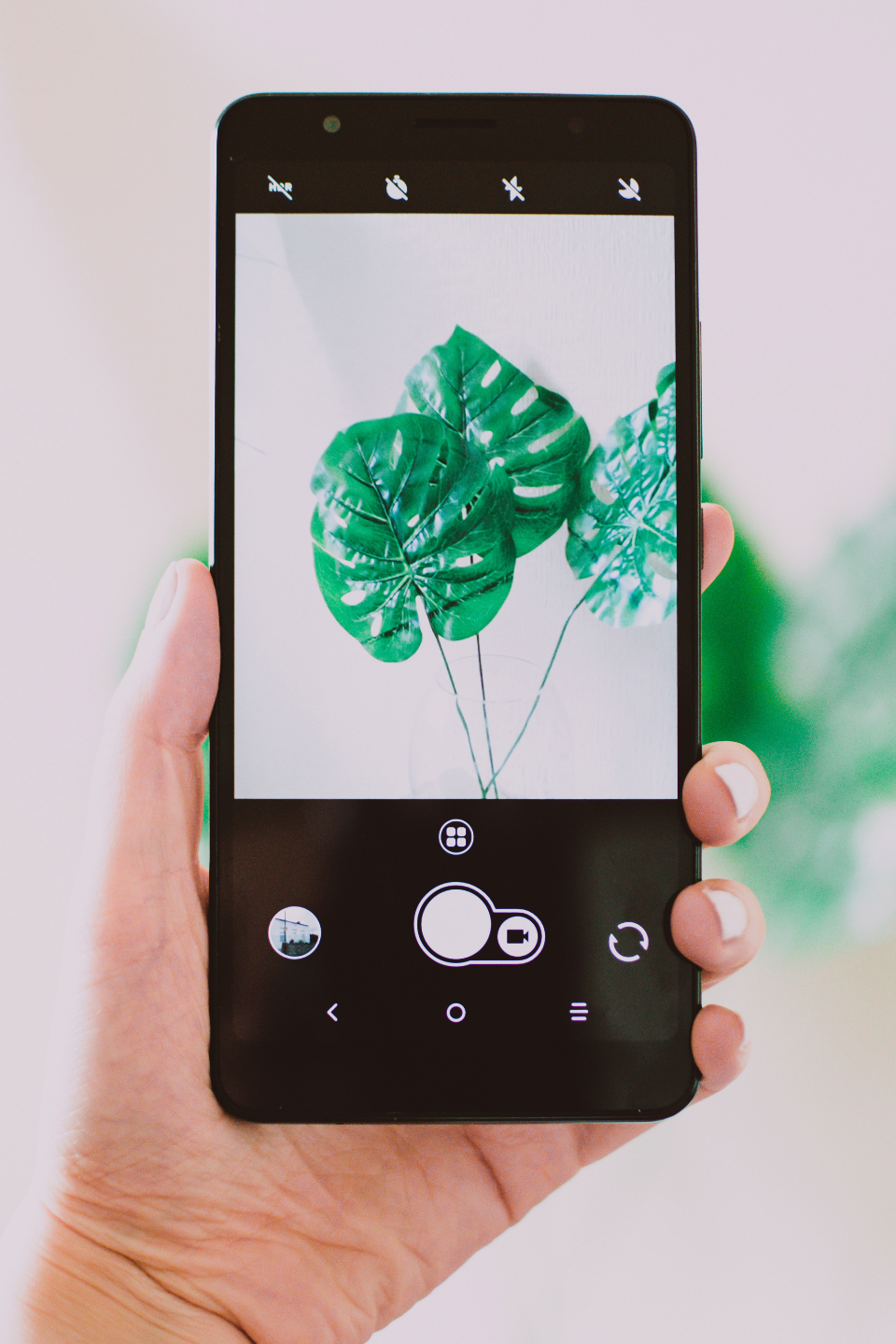 mobile photograph plant green nature device technology photo app mobile phone cellphone hand hold held