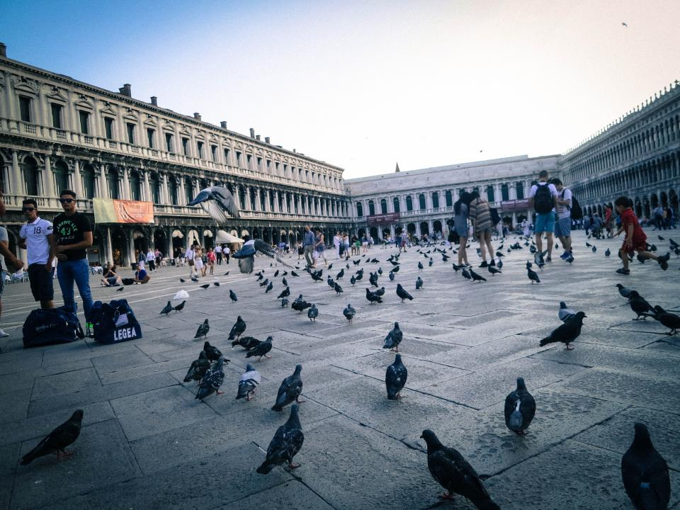 St Mark's Square Piazza San Marco Venice Italy pigeons birds people tourists buildings architecture city