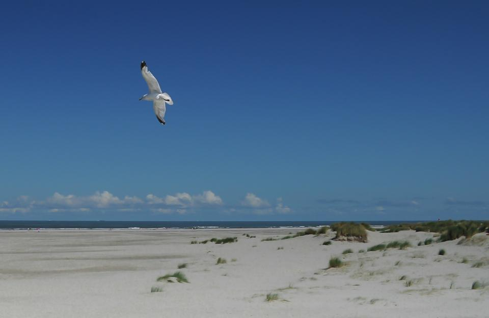 seagull bird wings flying beach sand water sky