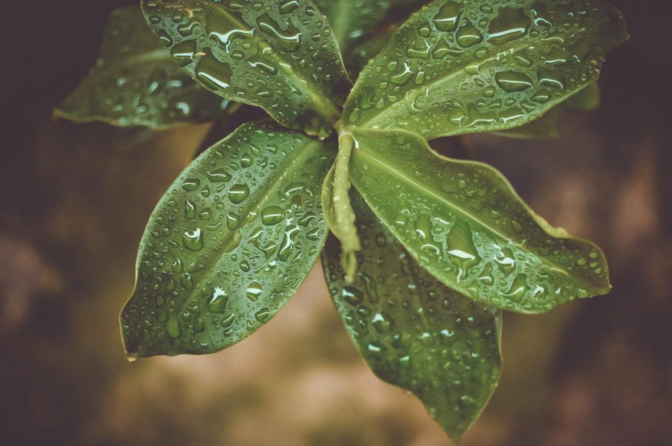 green plants leaves nature wet raining outdoors
