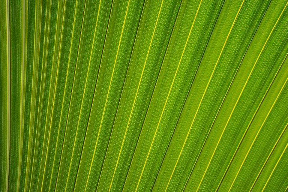 leaf leaves plants green nature texture