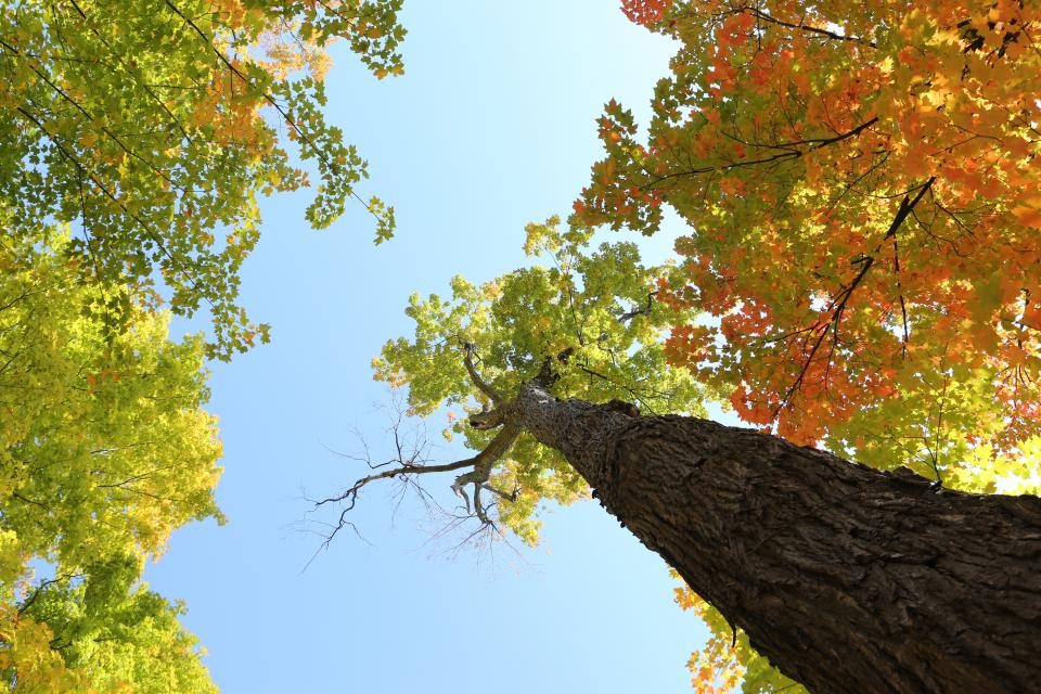 trees leaves autumn colors bark branches trunk sky