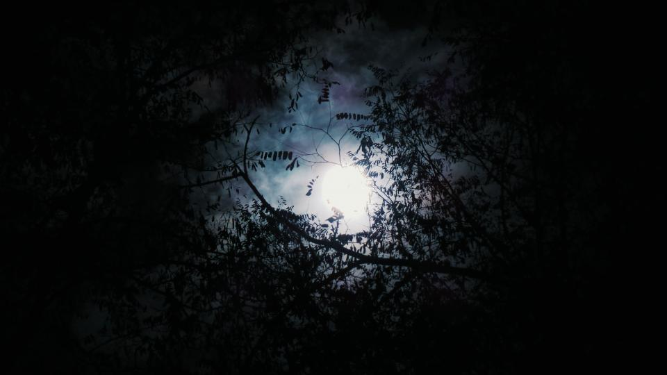 trees woods forest dark night moon clouds sky