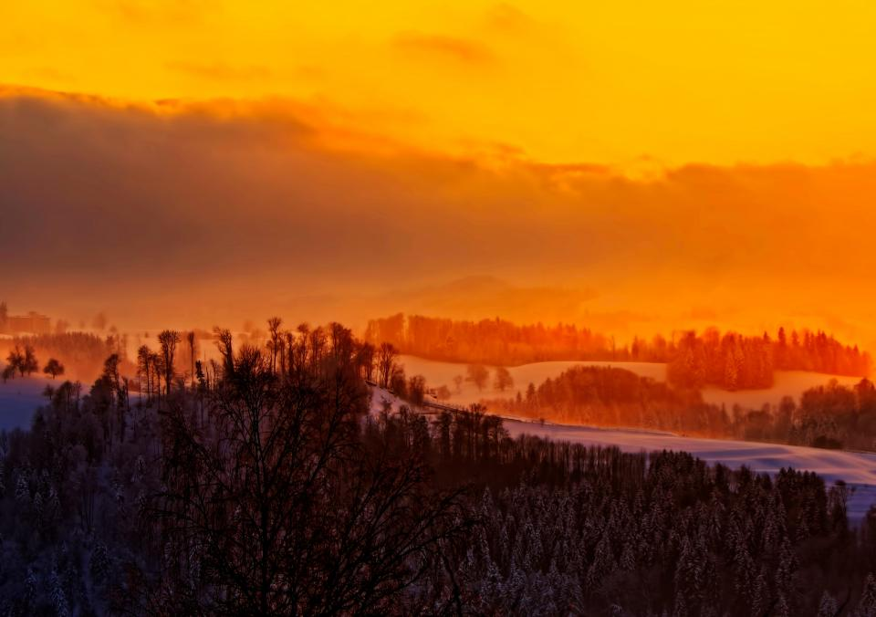 sunset orange sky trees plant nature snow winter