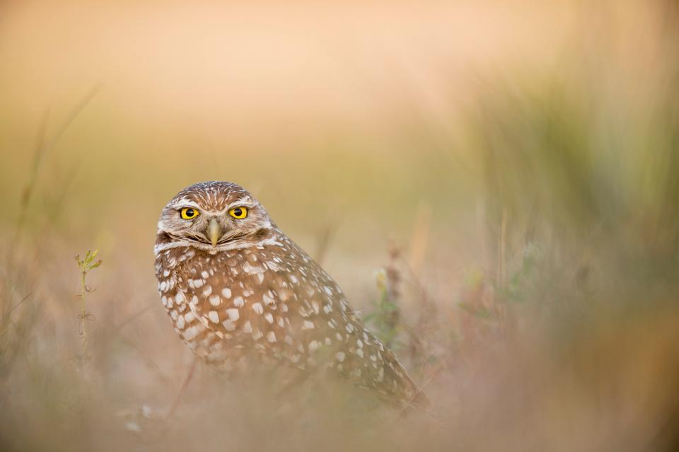 owl bird animal grass outdoor blur nature