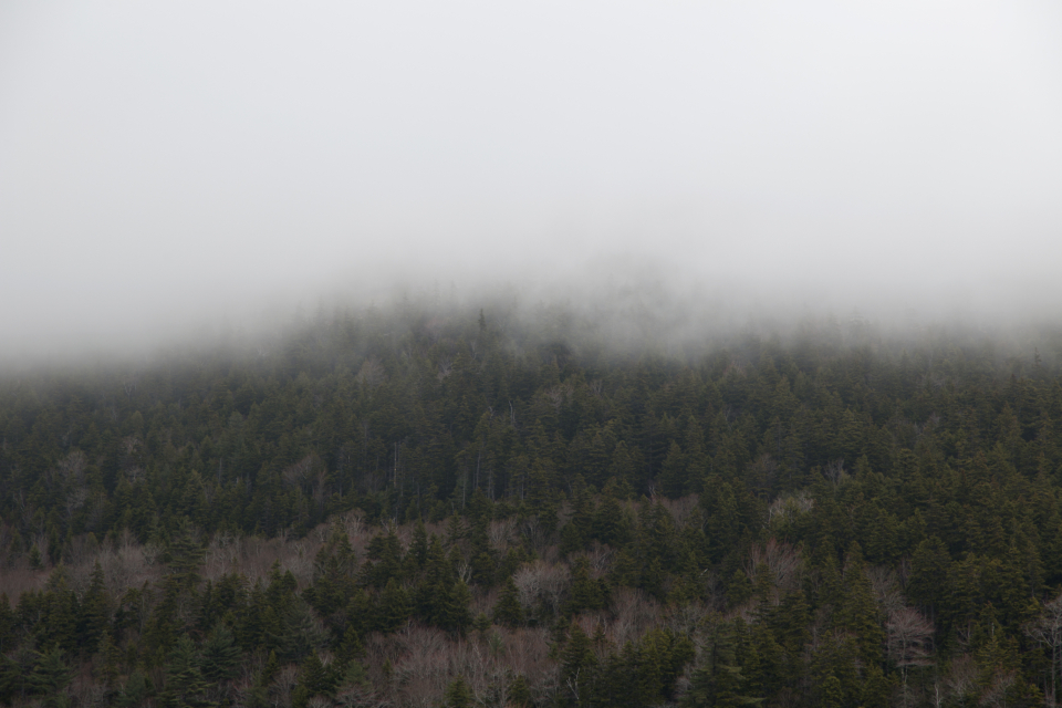 forest mountain fog clouds weather climate environment nature outdoors hiking exploring trees