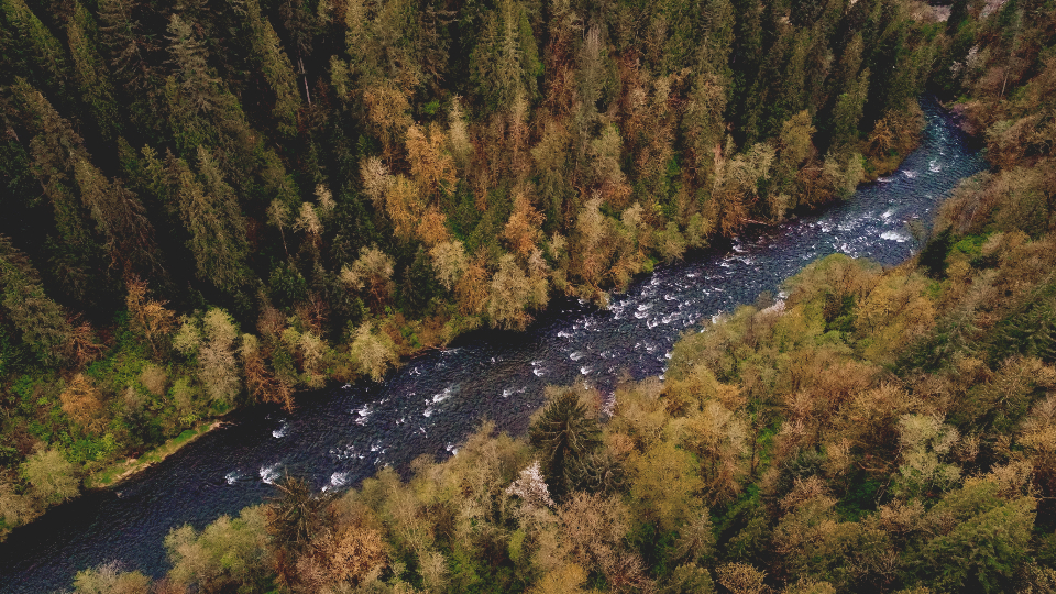 aerial river forest nature outdoors water landscape serene drone trees woods