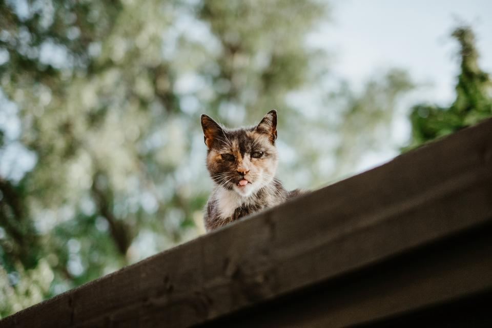 cat kitten animal pet blur bokeh roof