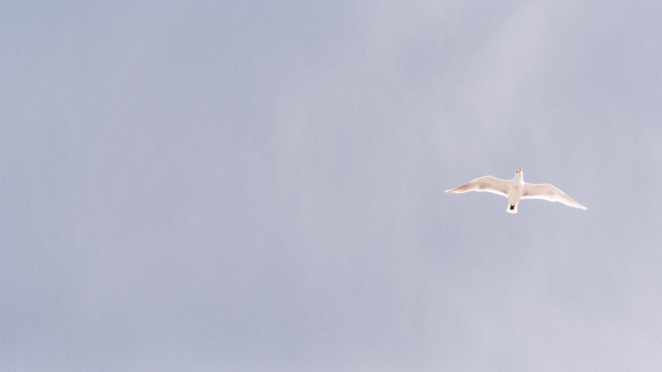 nature animals white bird sky peace