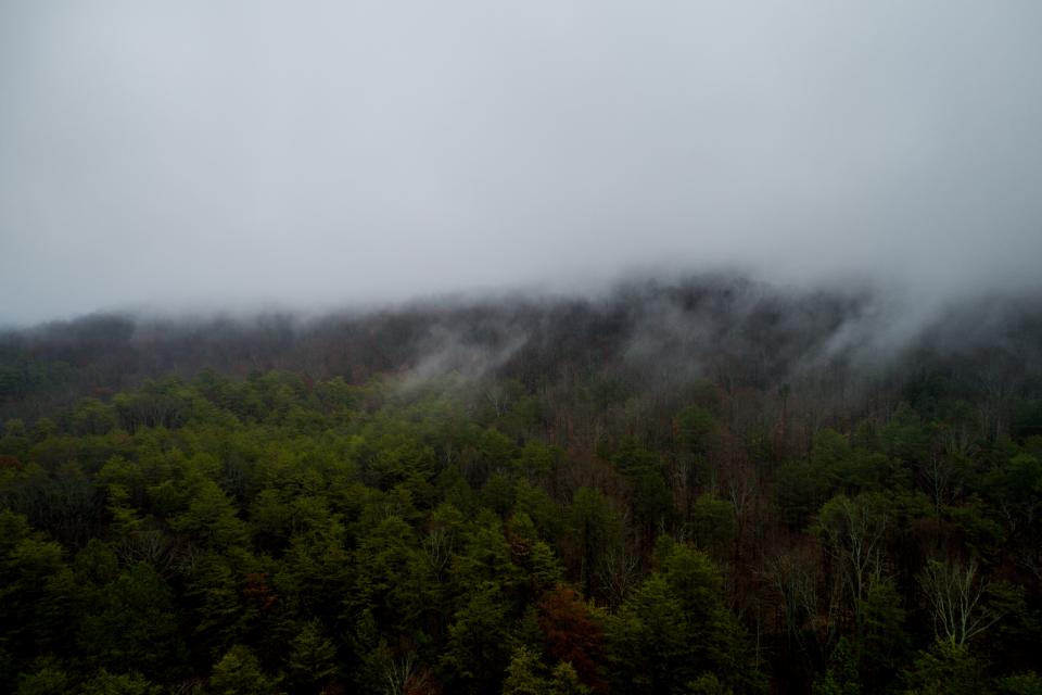 fog mountain woods forest green aerial