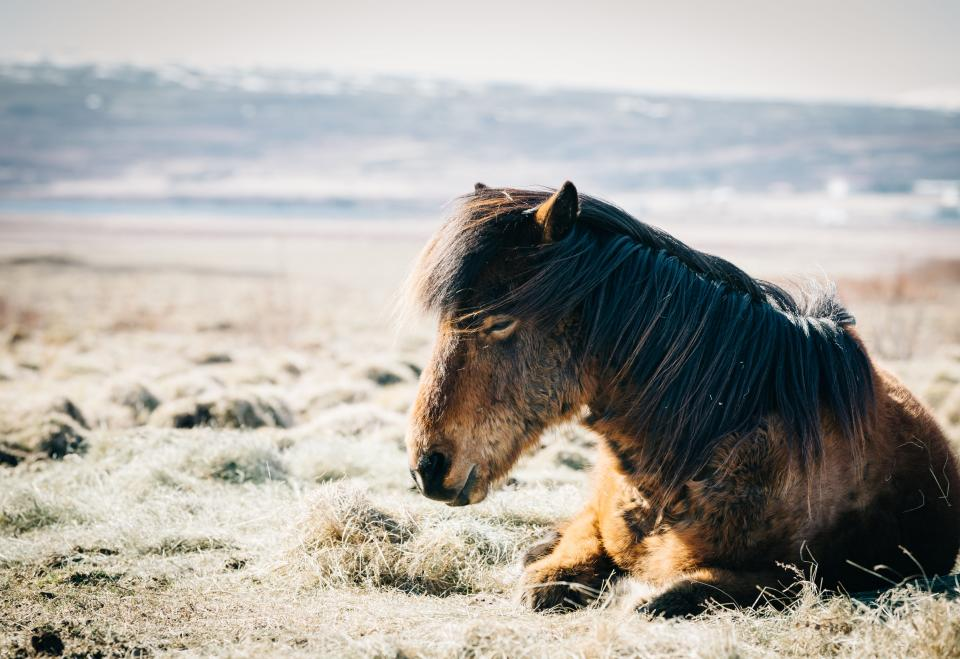 grass outdoor sunny day horse animal rest