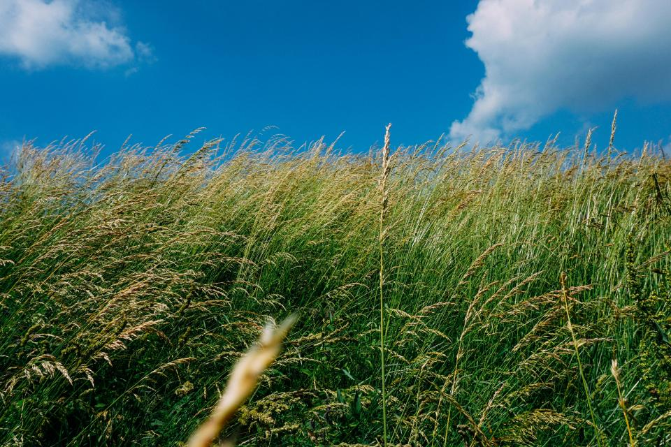 green grass plants field nature blue sky clouds