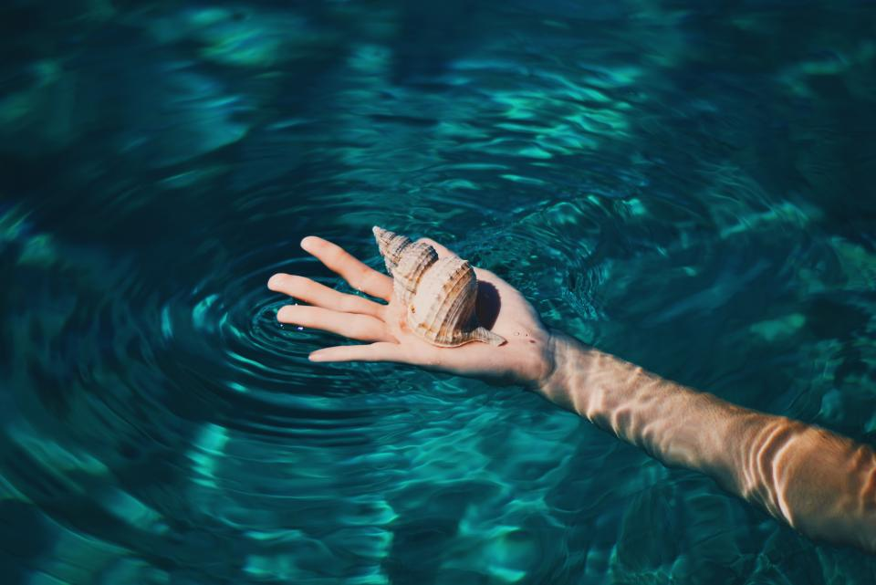 hand seashell water ocean sea lake arm swimming