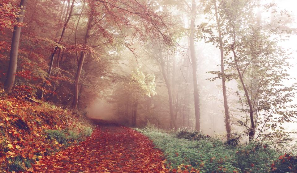 path trail forest woods trees leaves autumn fall fog foggy nature