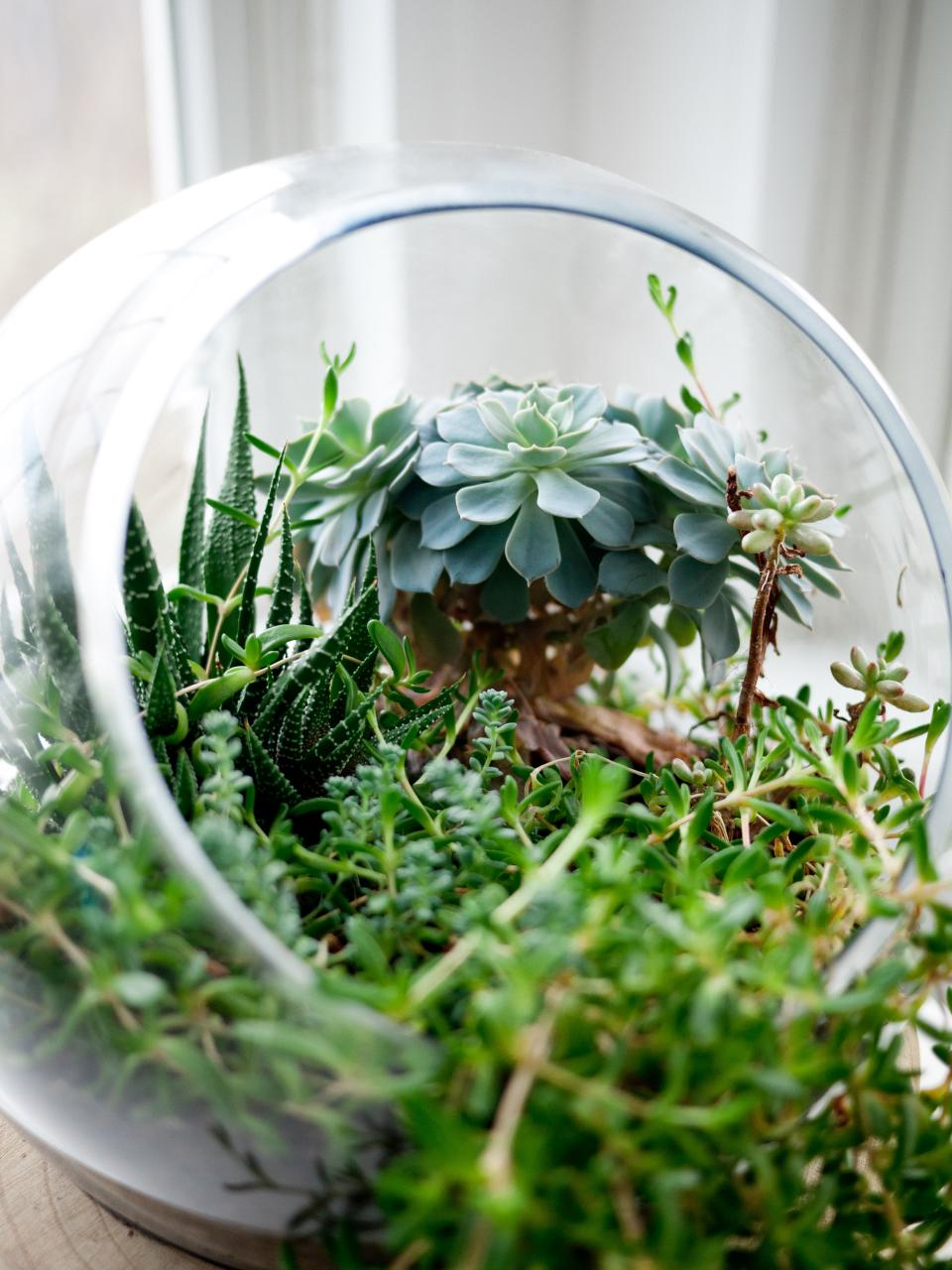 glass bowl green plants