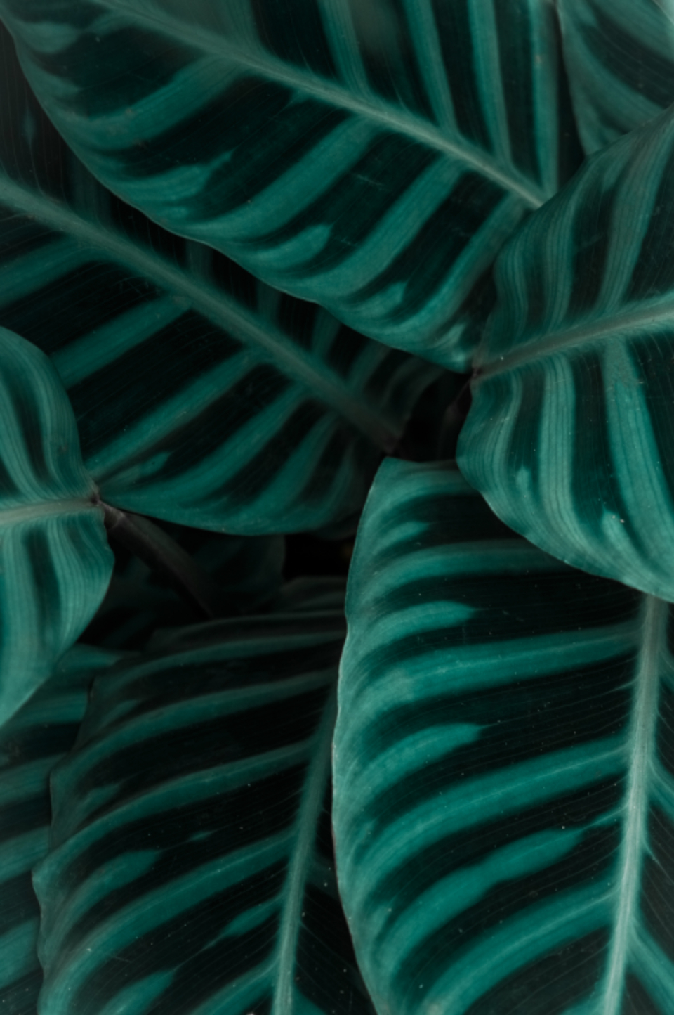 plant leaf textures pattern close up nature dark vegetation organic