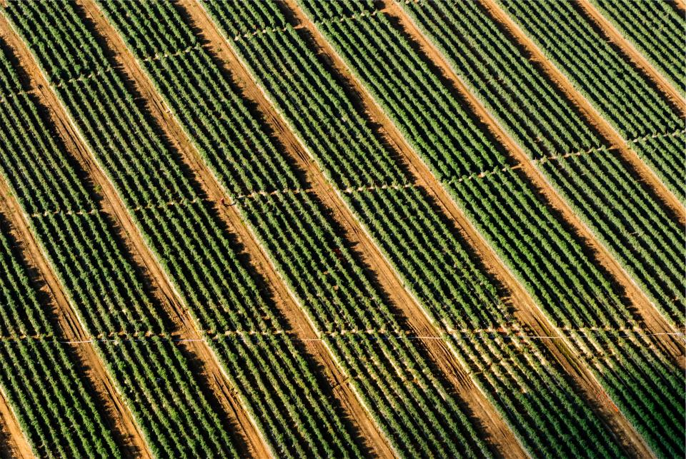 farm fields crops dirt aerial view