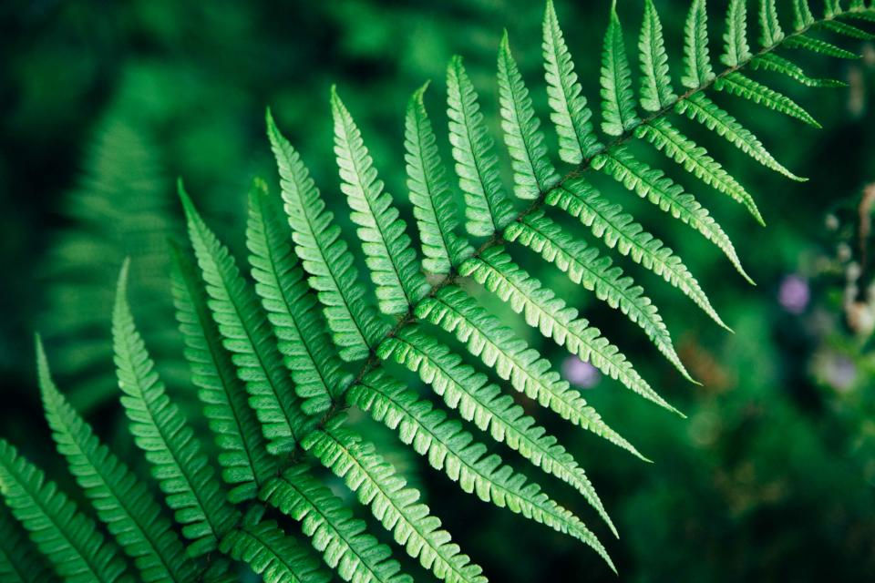 green leaf fern nature outdoor blur plant