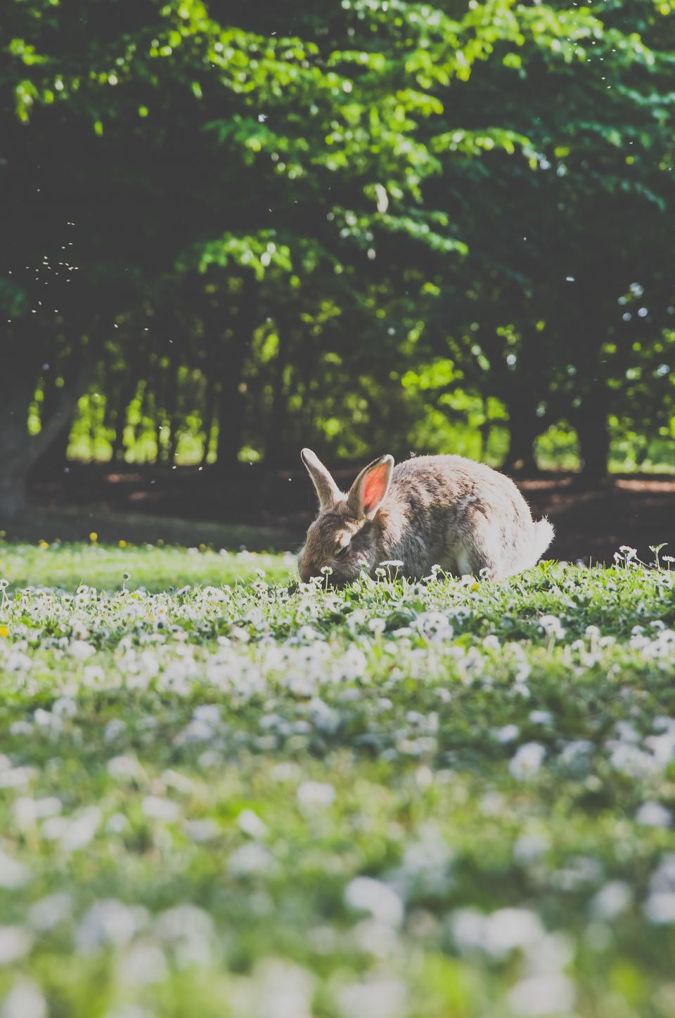 rabbit pet animal green grass flowers blur bokeh outside trees plants nature