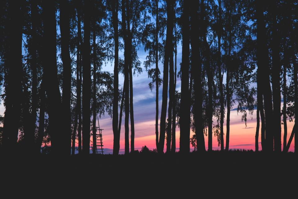 nature landscape forest trees bark branches leaves sky clouds horizon shadows silhouette gradient pink purple orange blue