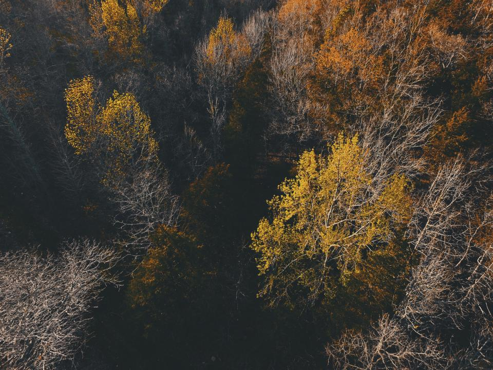 nature landscape woods forest trees leaves aerial travel adventure autumn fall