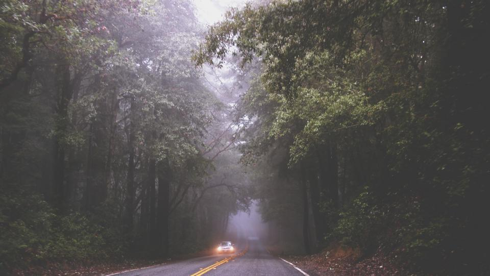 road fog mist car driving headlights pavement trees forest woods