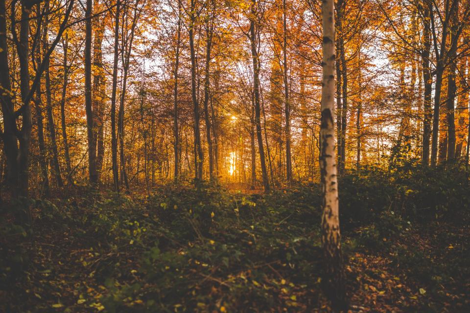 trees wood plants forest leaves fall autumn sunset sunrise nature