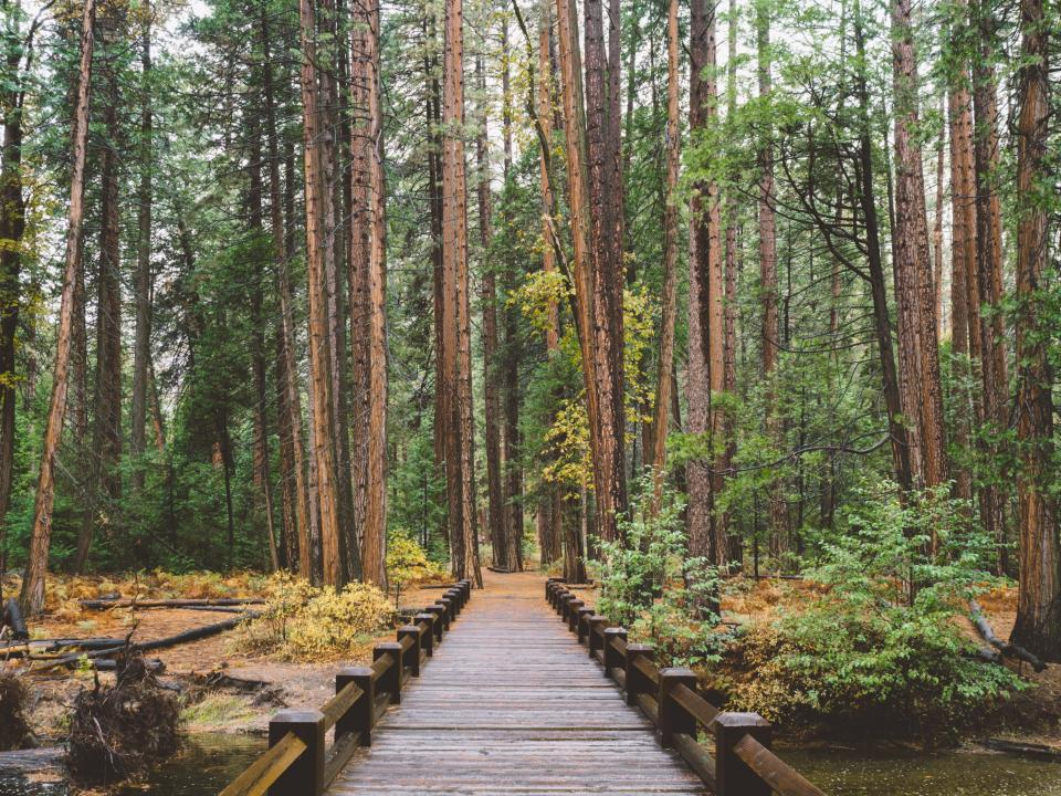 pathway bridge outdoor nature trees plant forest