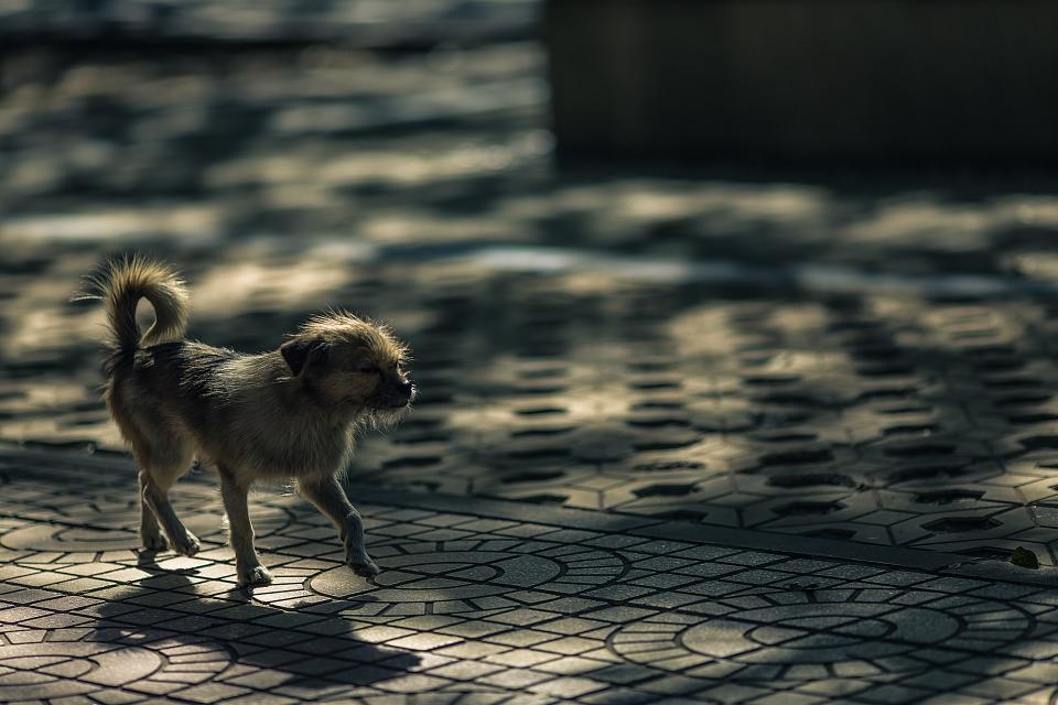 animals dogs domesticated pets eyes muzzle walk bokeh tiled pavements