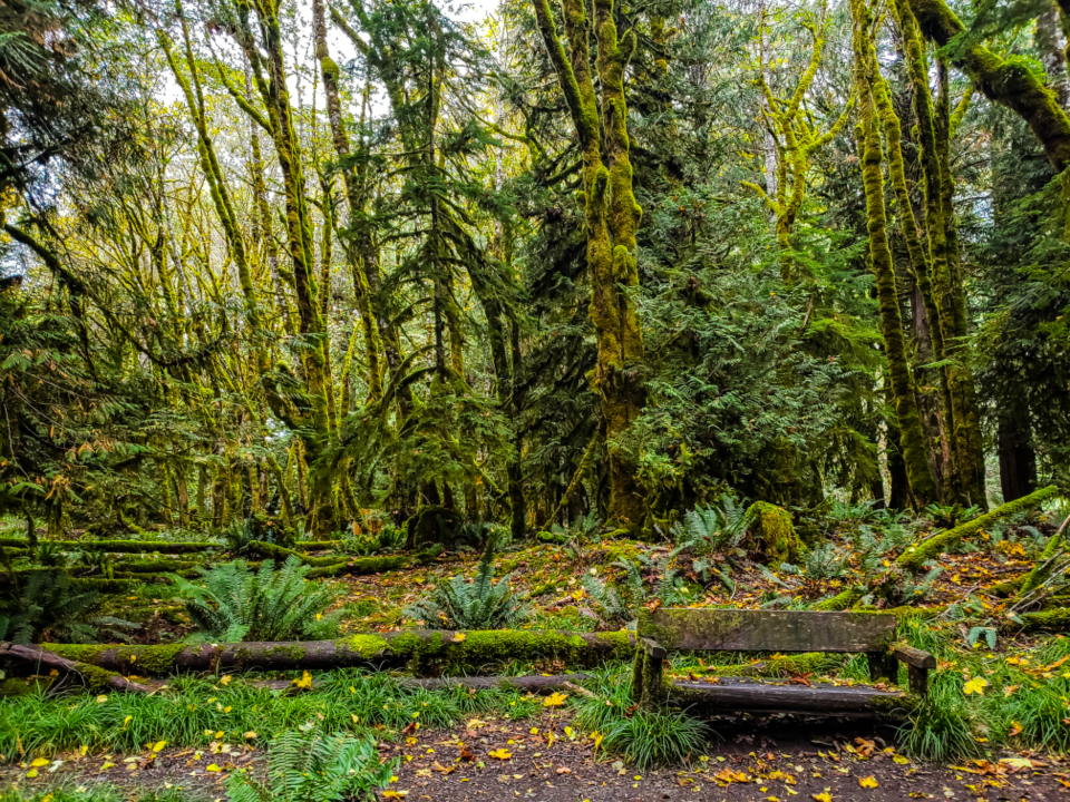 lush forest hiking trail woods trees moss green bench timber vegetation nature outdoors