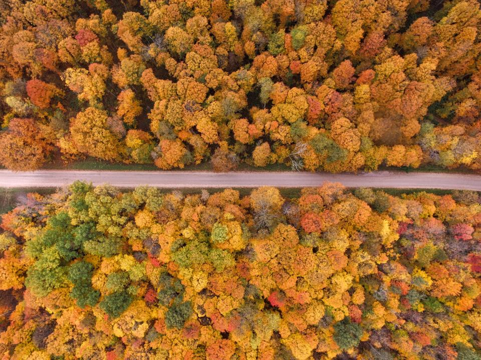 trees clolorful aerial view plant forest nature fall autumn road