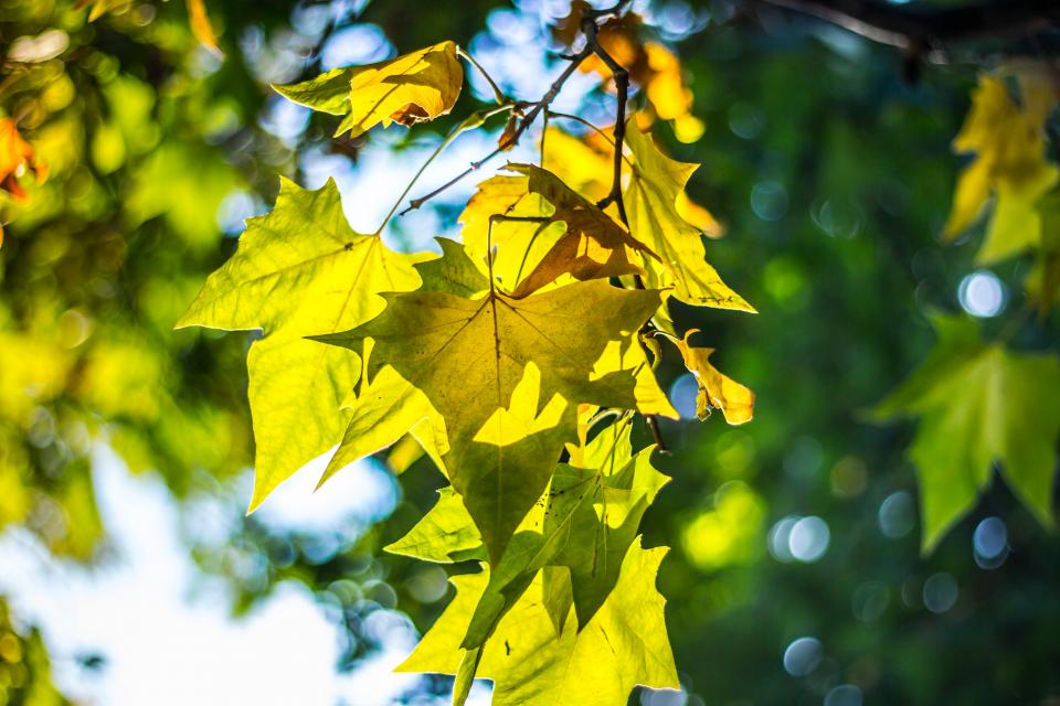 leaves trees branches nature autumn fall sunshine