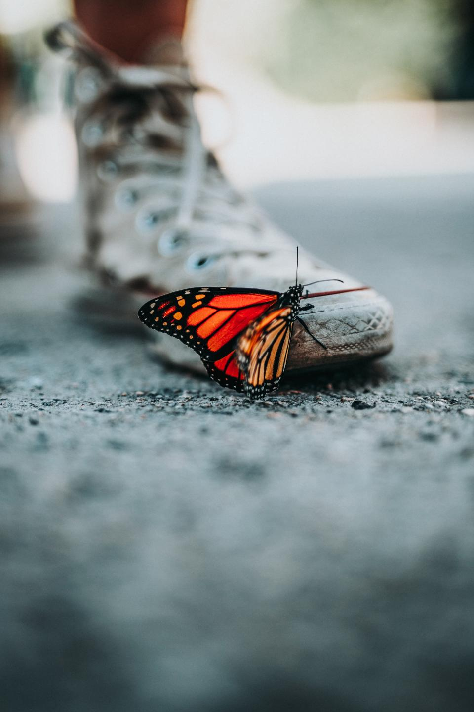 butterfly insect animal street blur shoe sneakers